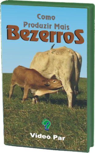 Como Produzir mais Bezerros