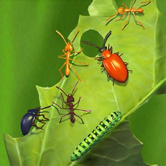 Curso à Distância em Controle Alternativo de Pragas e Doenças de Plantas