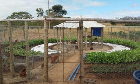 Horta circular agroecológica é a nova aposta no Norte de Minas